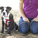 They Don't Want You To Have These Dog Ownership Secrets