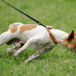 Need To Deal With Dog-related Issues? Read This Article