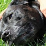 Learn How To Take The Best Care Of Your Dog.
